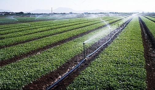 2015 Une Annee Agricole Exceptionnelle Pour Le Maroc Selon L Obg